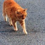 Die Tobermory Cat