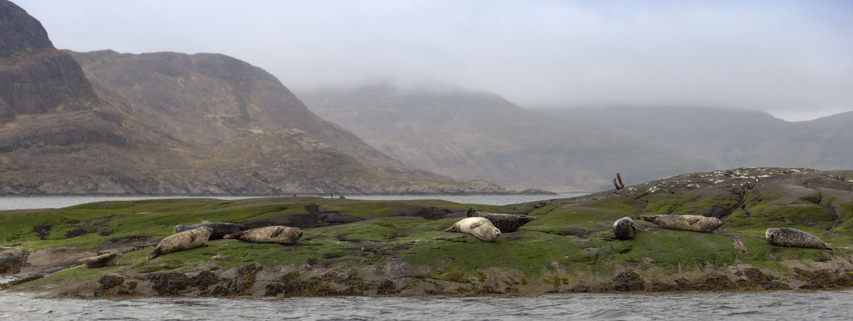 Seehunde im Loch Scavaig