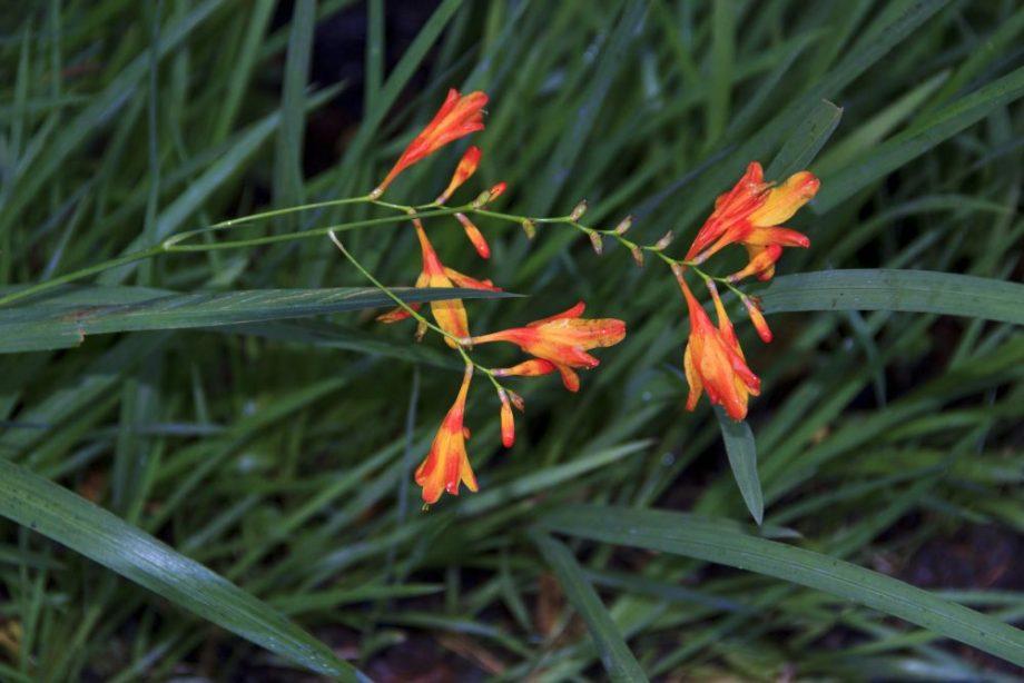 Weitere Pflanzen im Inverewe Garten