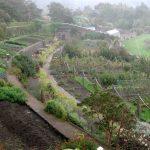 Ein Regenschauer über dem Walled Garden