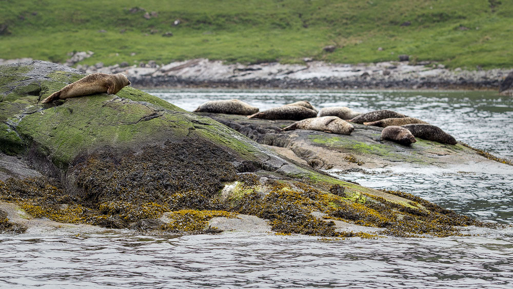 Mit dem Boot fahren wir noch eine gute Stunde durch die Gegend und treffen auf Seehunde