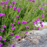 Blumen und Stein
