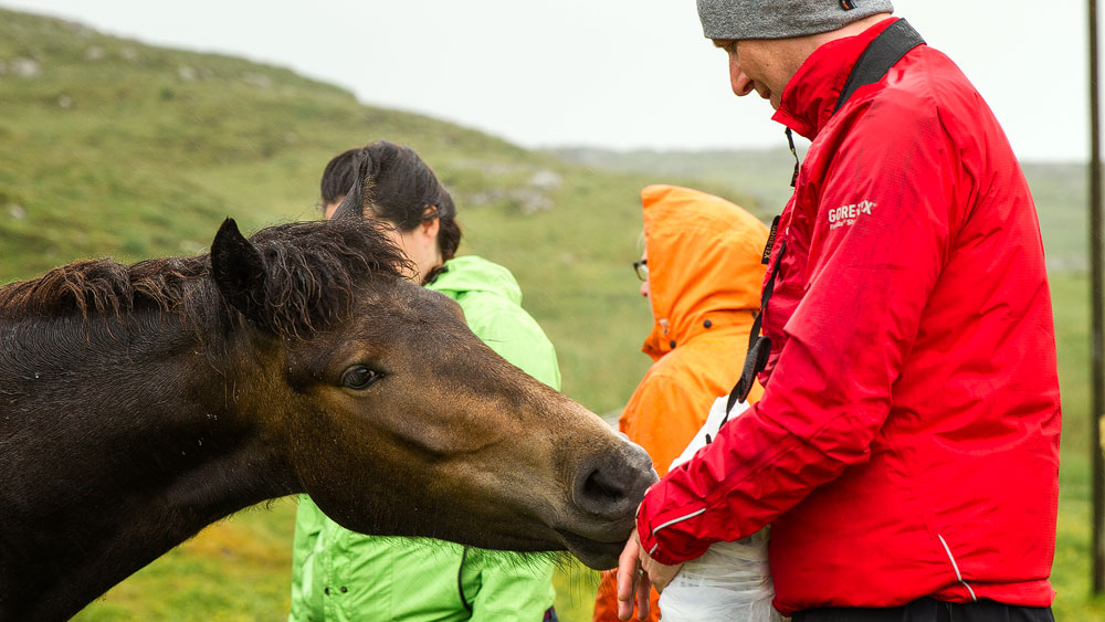 Eriskay Pony bei Stephan; Foto: Martin Goldmann