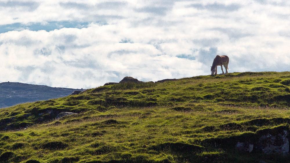 Pony auf Barra