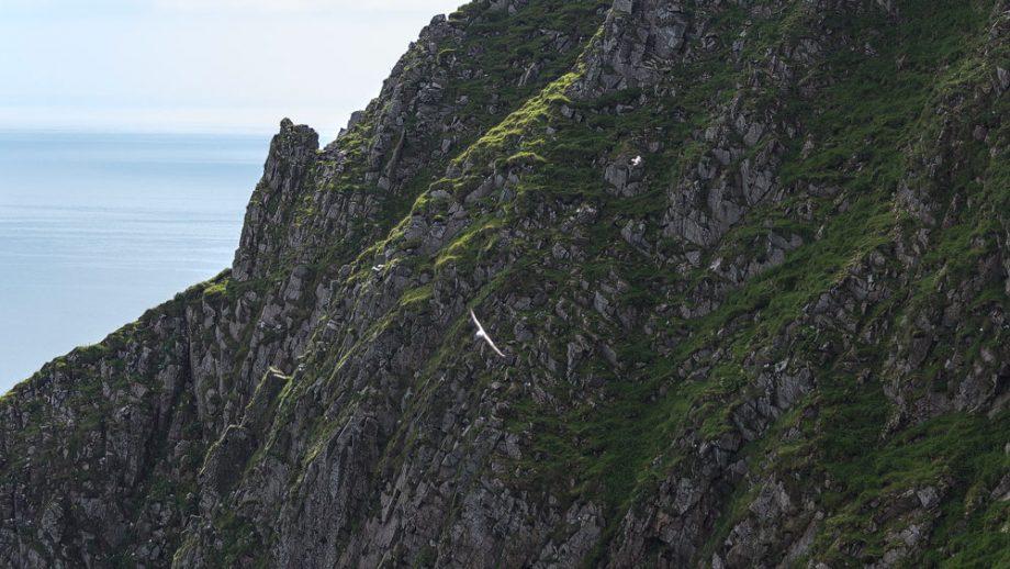 St-Kilda-Nordklippe-Hirta