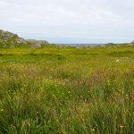 Vegetation auf Great Bernera