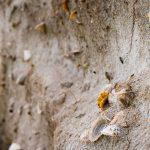 Muscheln in den Dünen von Balranald