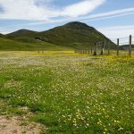 Machair auf der Isle of Harris