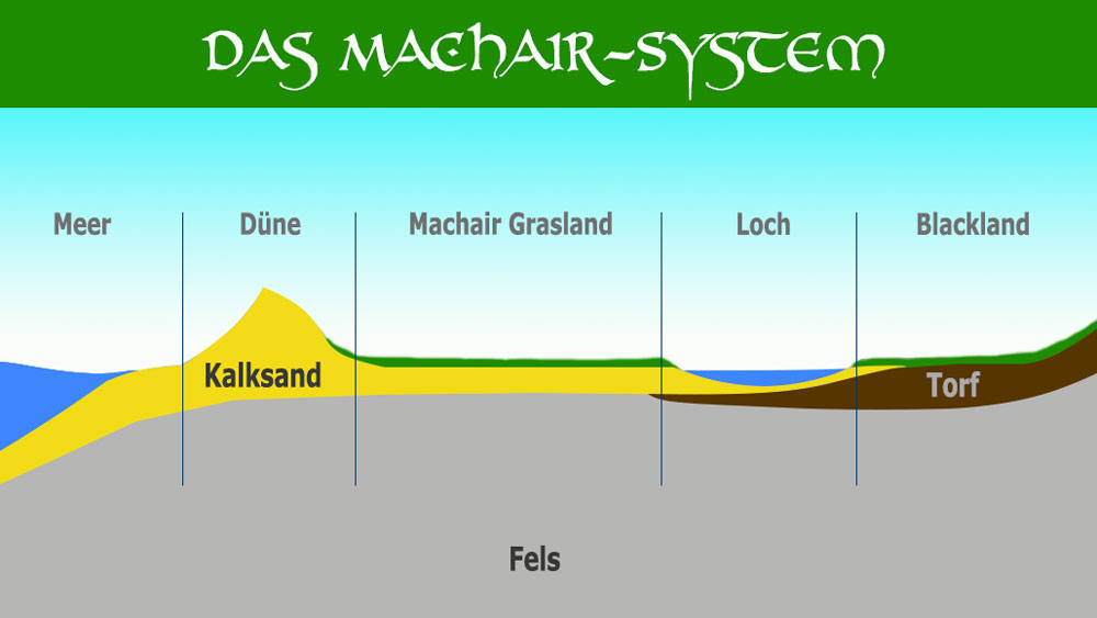 Grafik Machair System