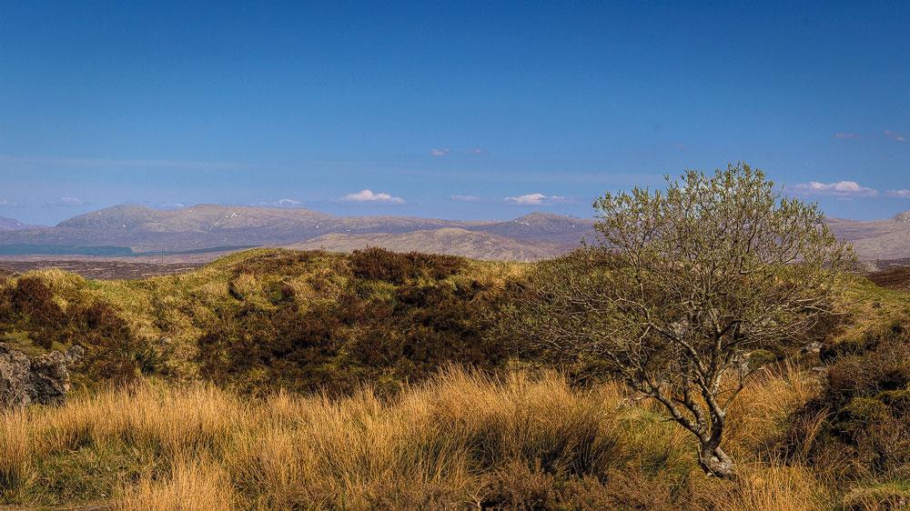 Ein Baum vor dem Moor