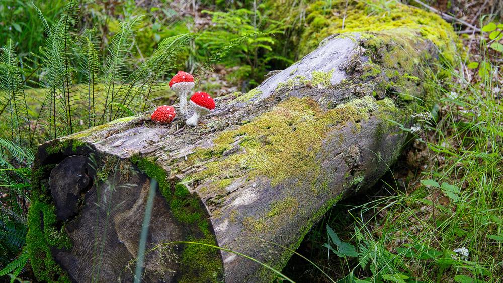Pilze aus Wolle