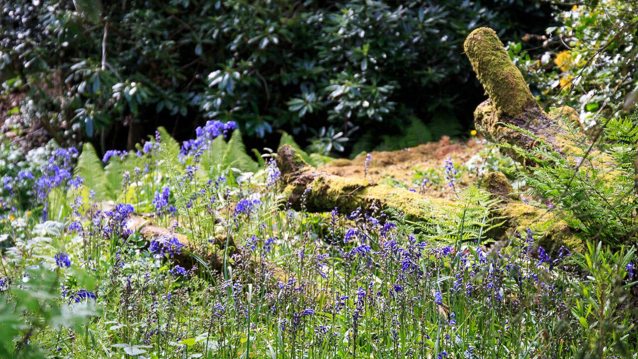 Wilder Teil des Gartens