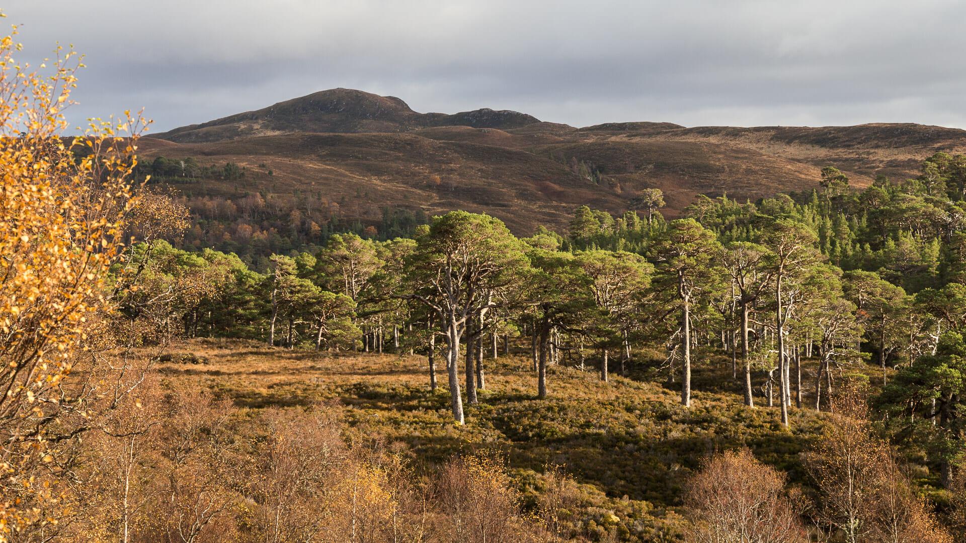 Bäume im Glen Affric