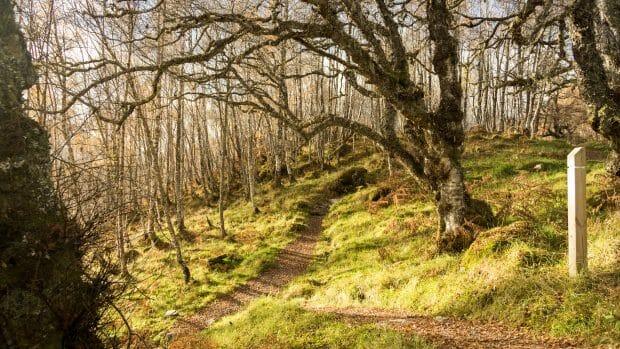 Weg zum Glen Affric Viewpoint