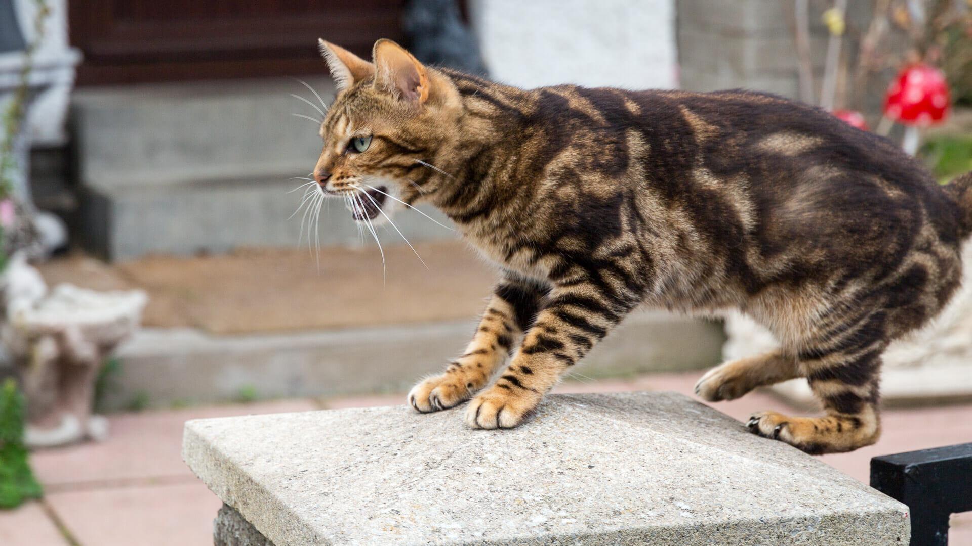 Katze in Kenmore