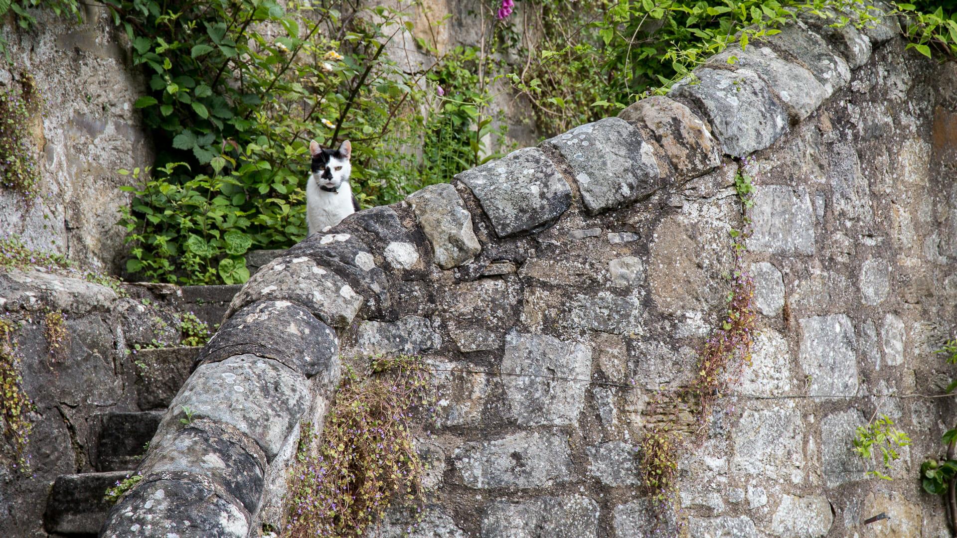 Katze in Culross Palace Garten