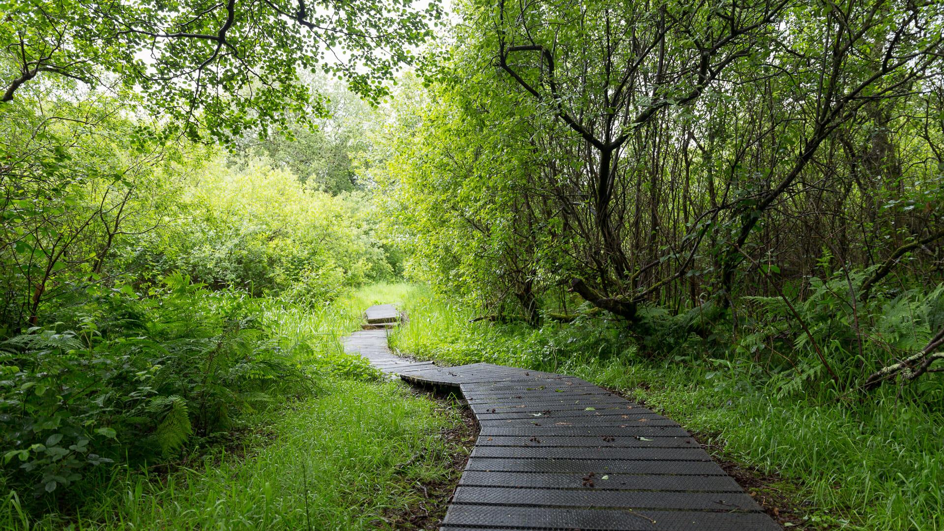 Weg durch den Sumpf