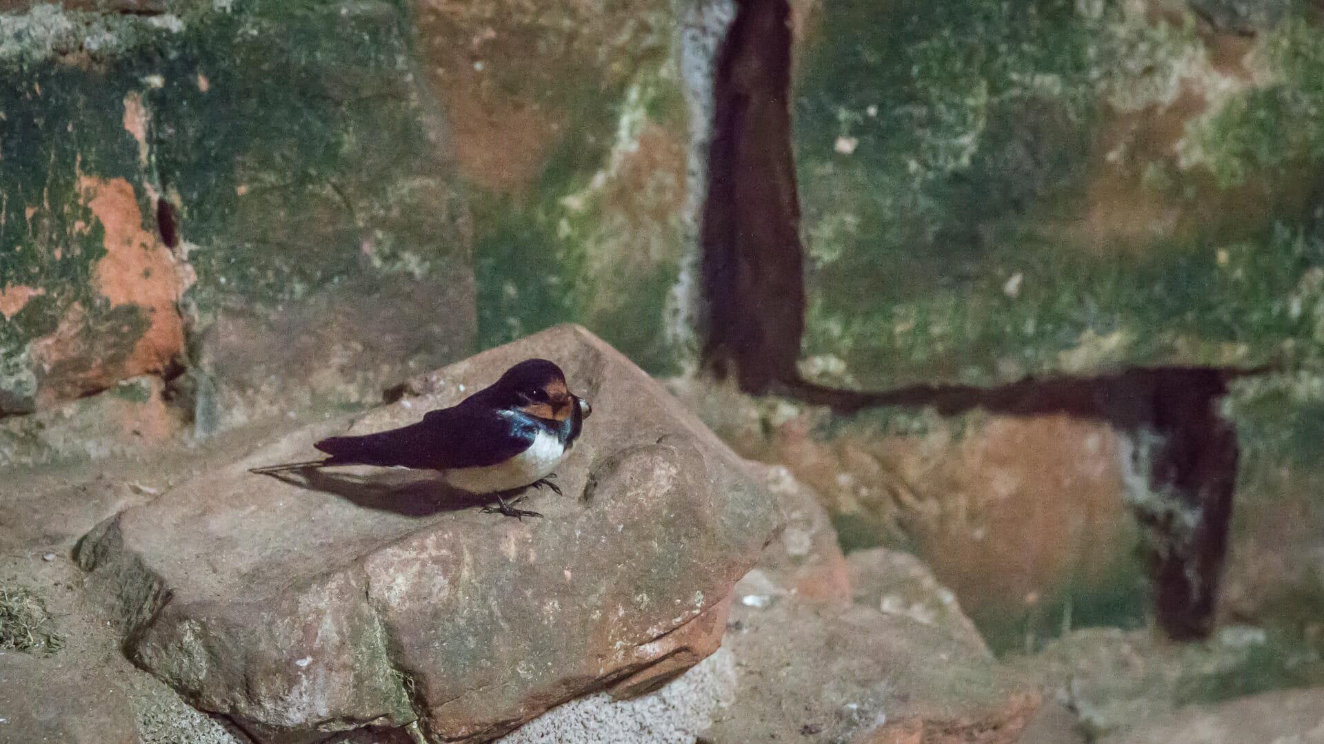 Dieser Vogel suchte Schutz in der Burg