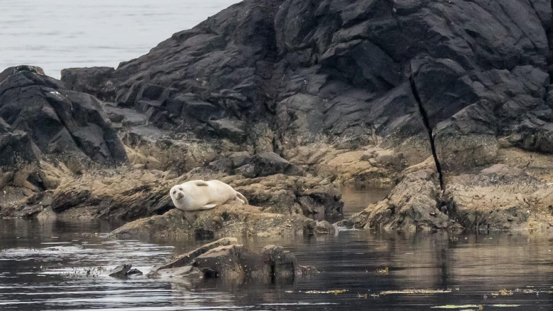 Seehund in der Bucht