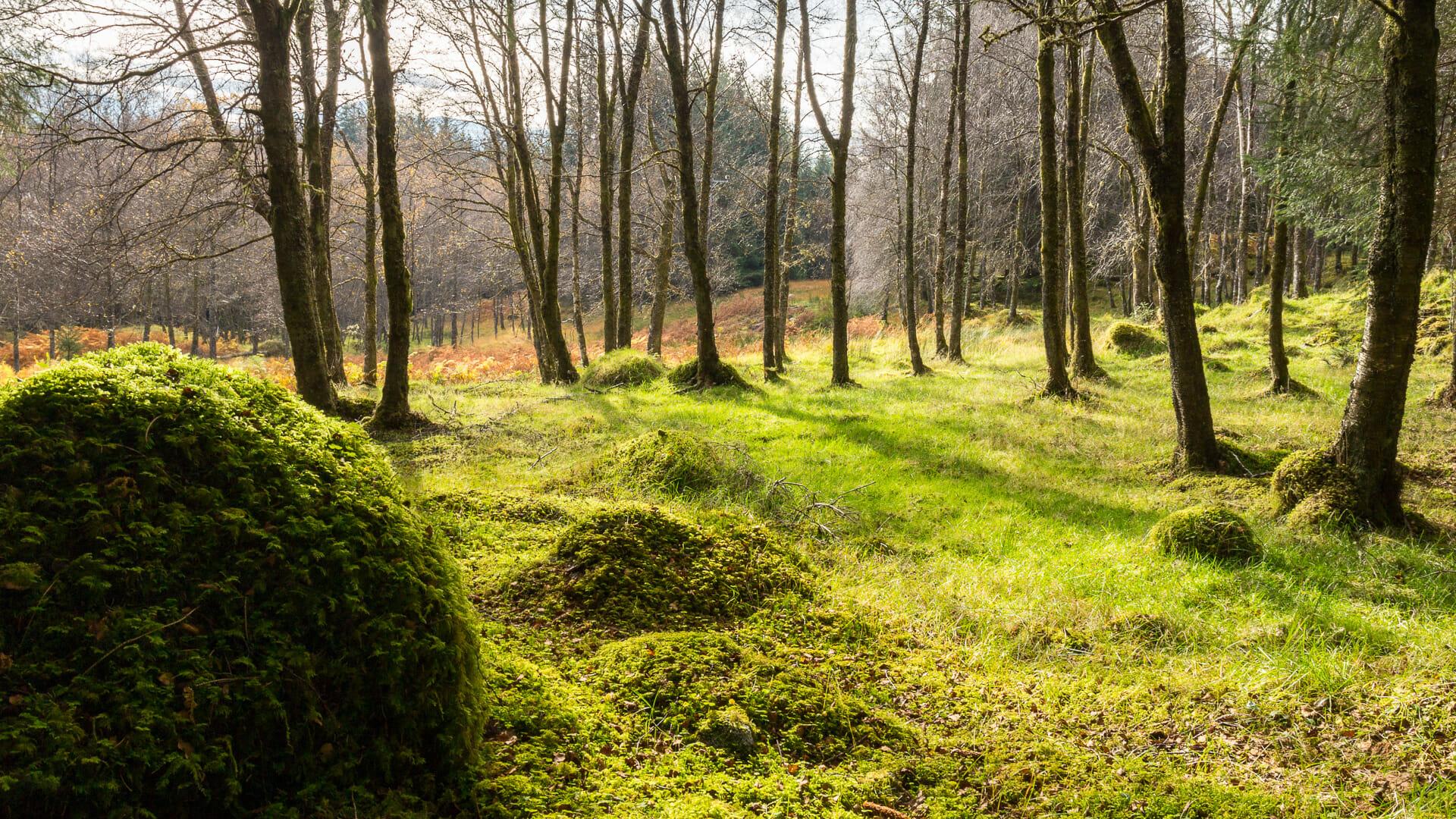 Im Wald am Loch Laidon