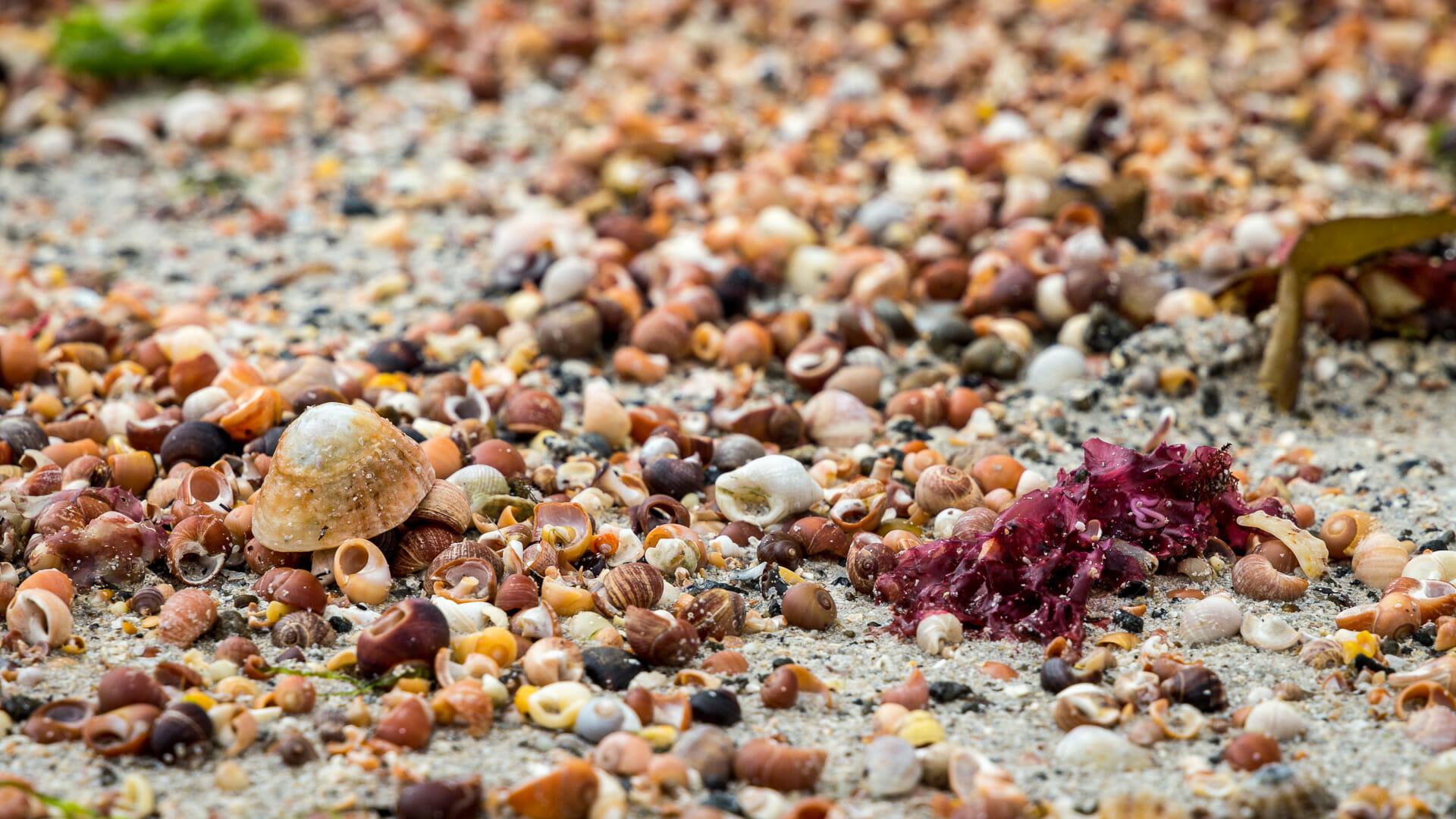 Schnecken am Sanna Beach