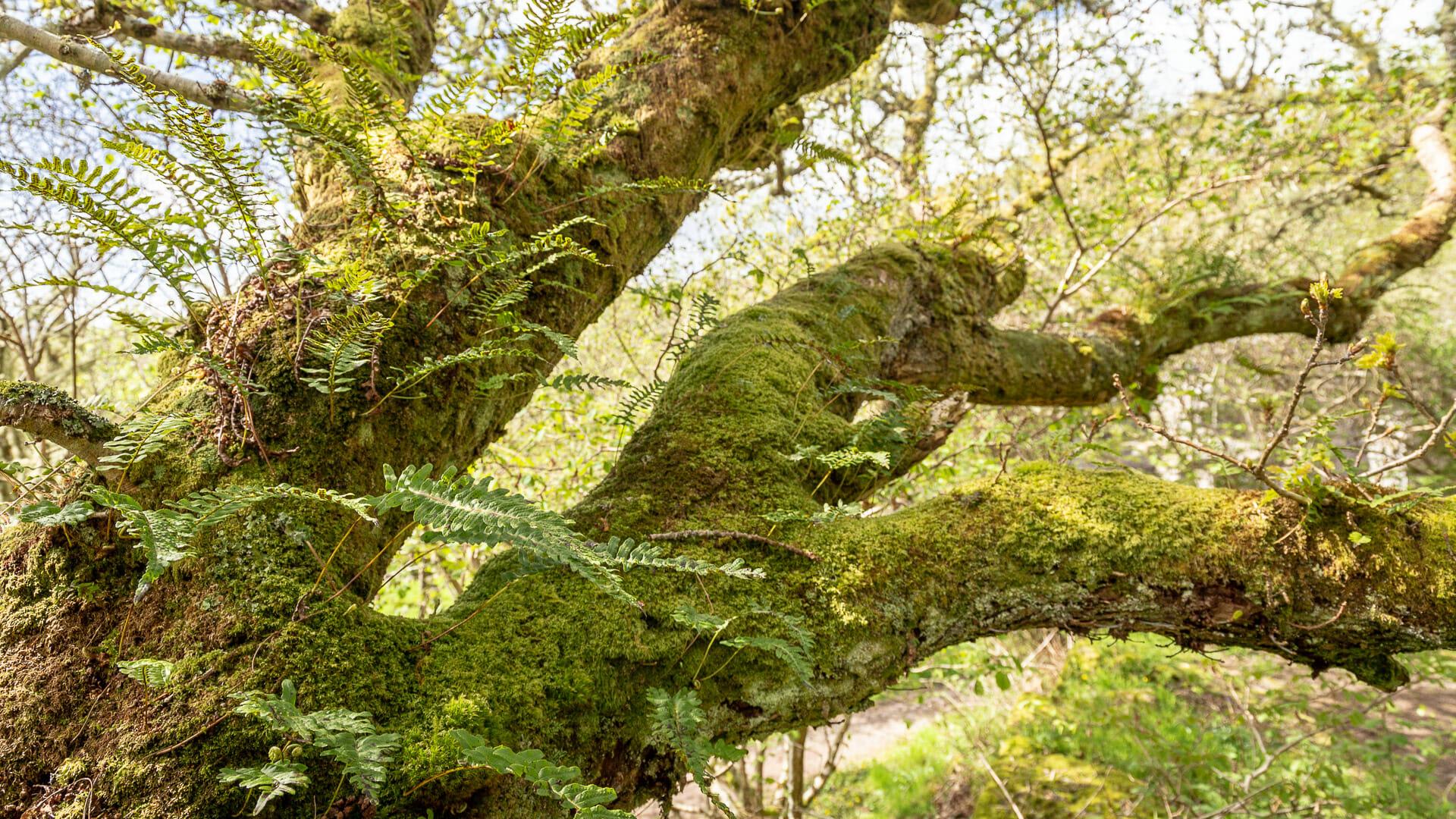 Alte Bäume mit Moos und Flechten bewachsen