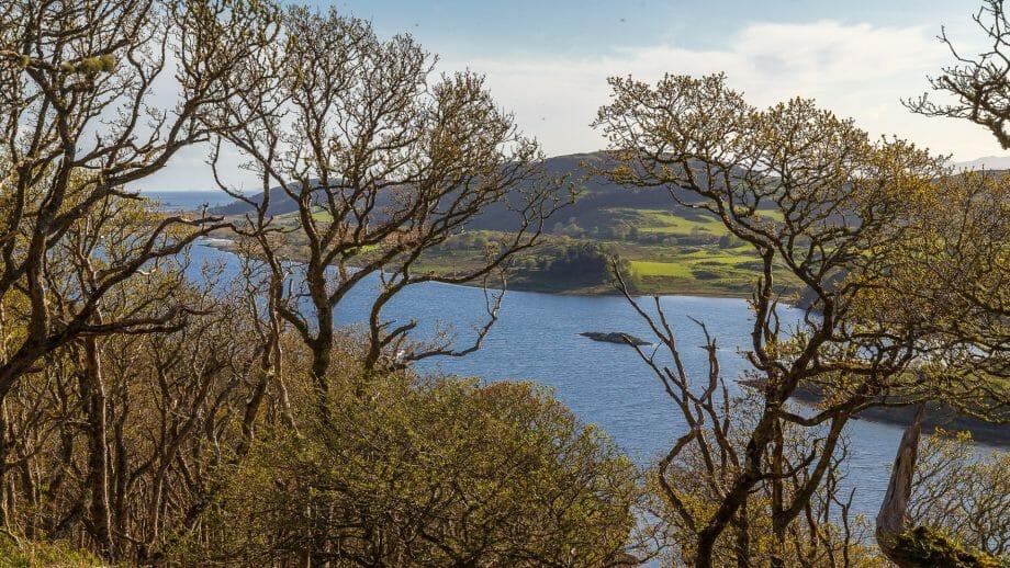 Blick über Loch Taynish durch die Bäume am Barr Mòr