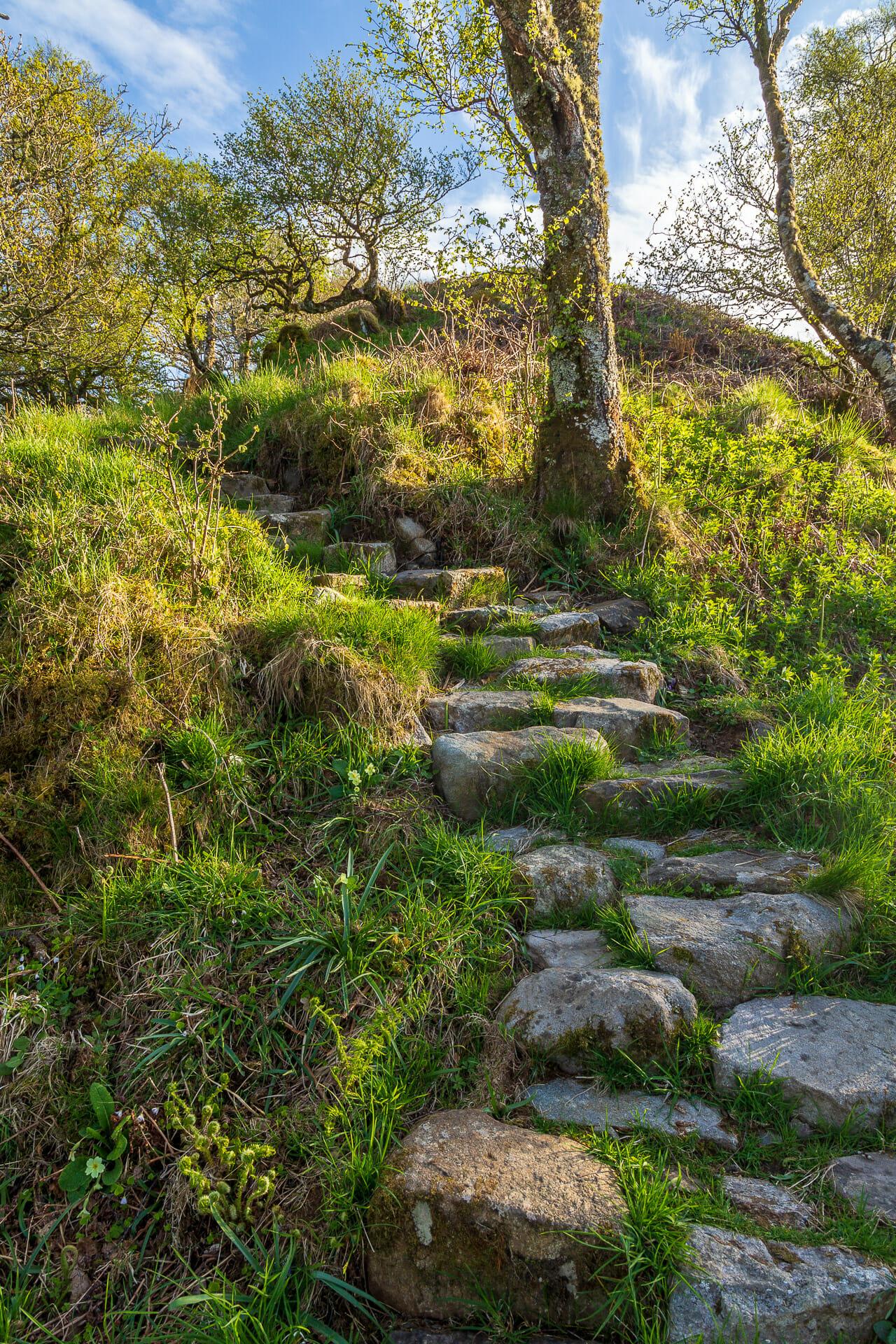 Treppen im Wald