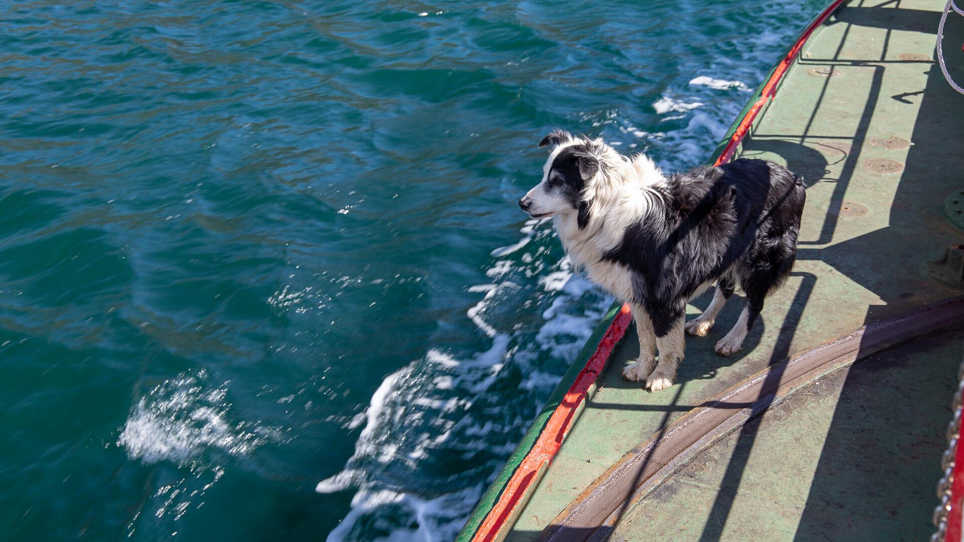 Hund auf der Glenelg-Skye Ferry