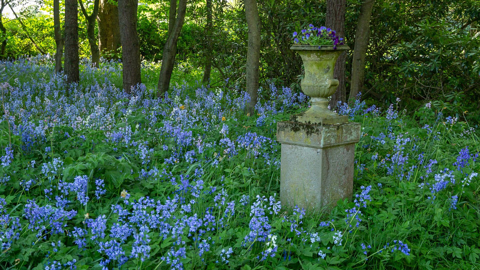 Bluebells im Park