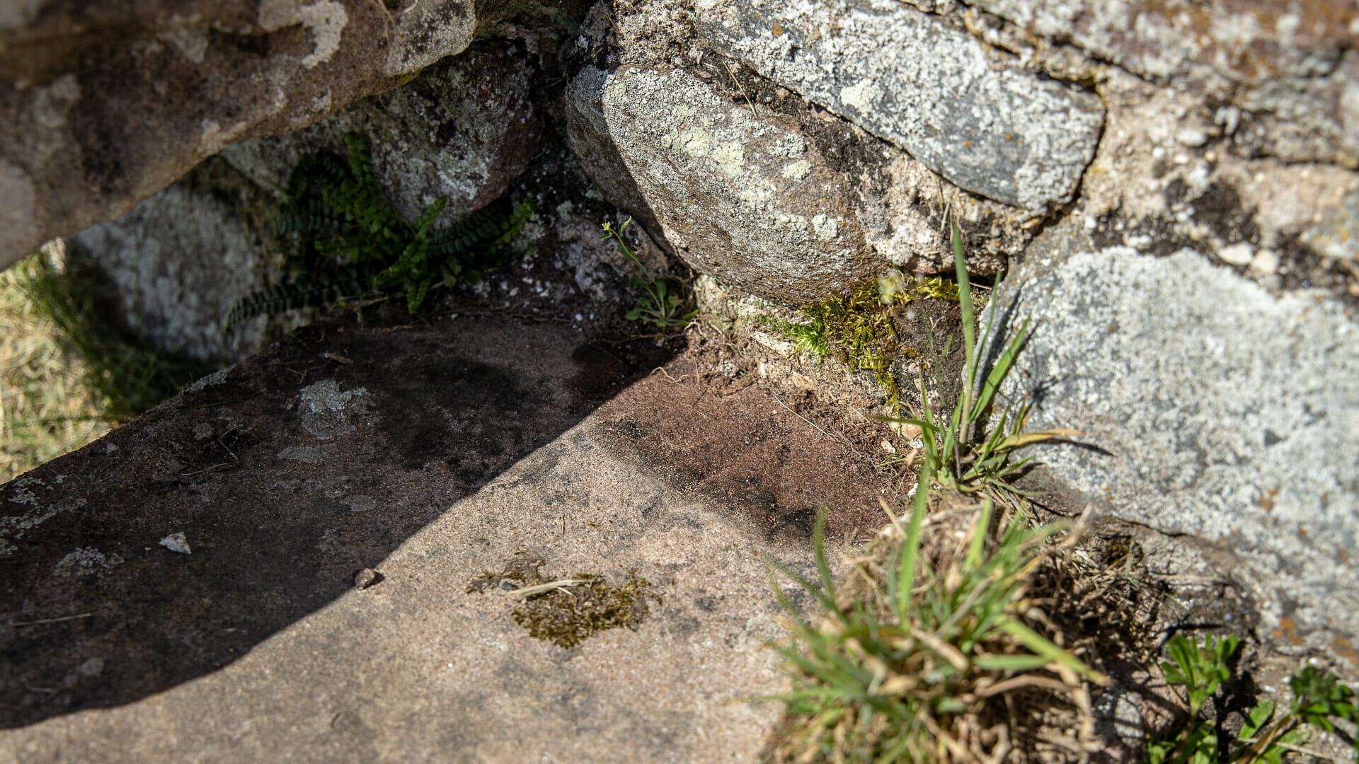 Trittstein der Mauer - die Gravur ist schwer zu erkennen