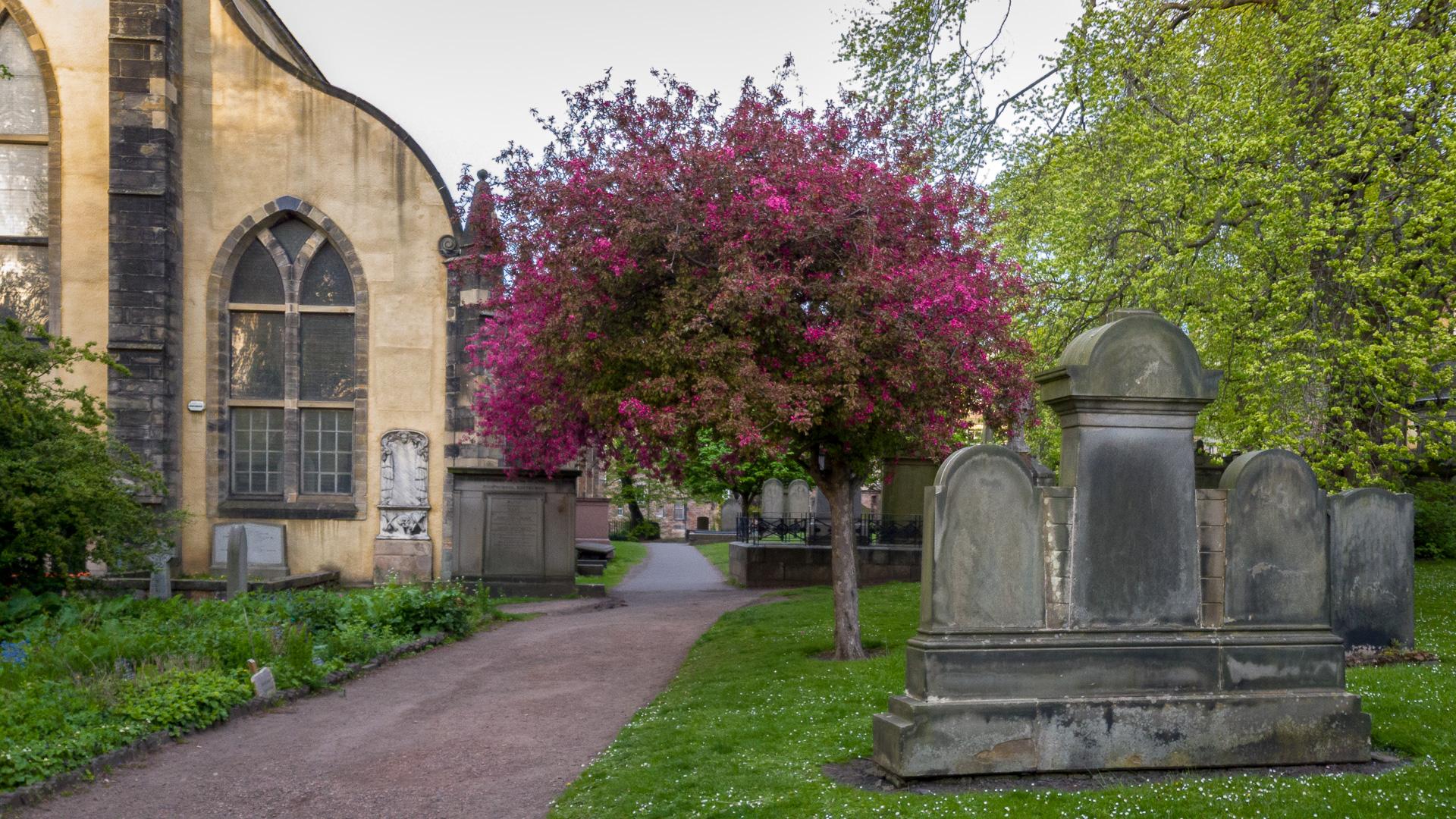 Bäume und Grabsteine machen den Friedhof zur grünen Insel