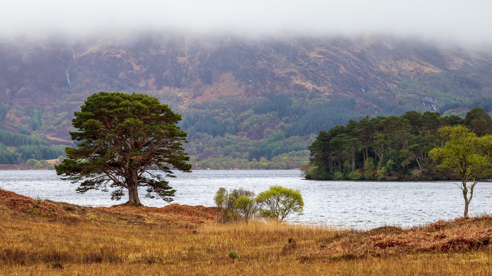 Blick auf Loch Morar vom Nordufer