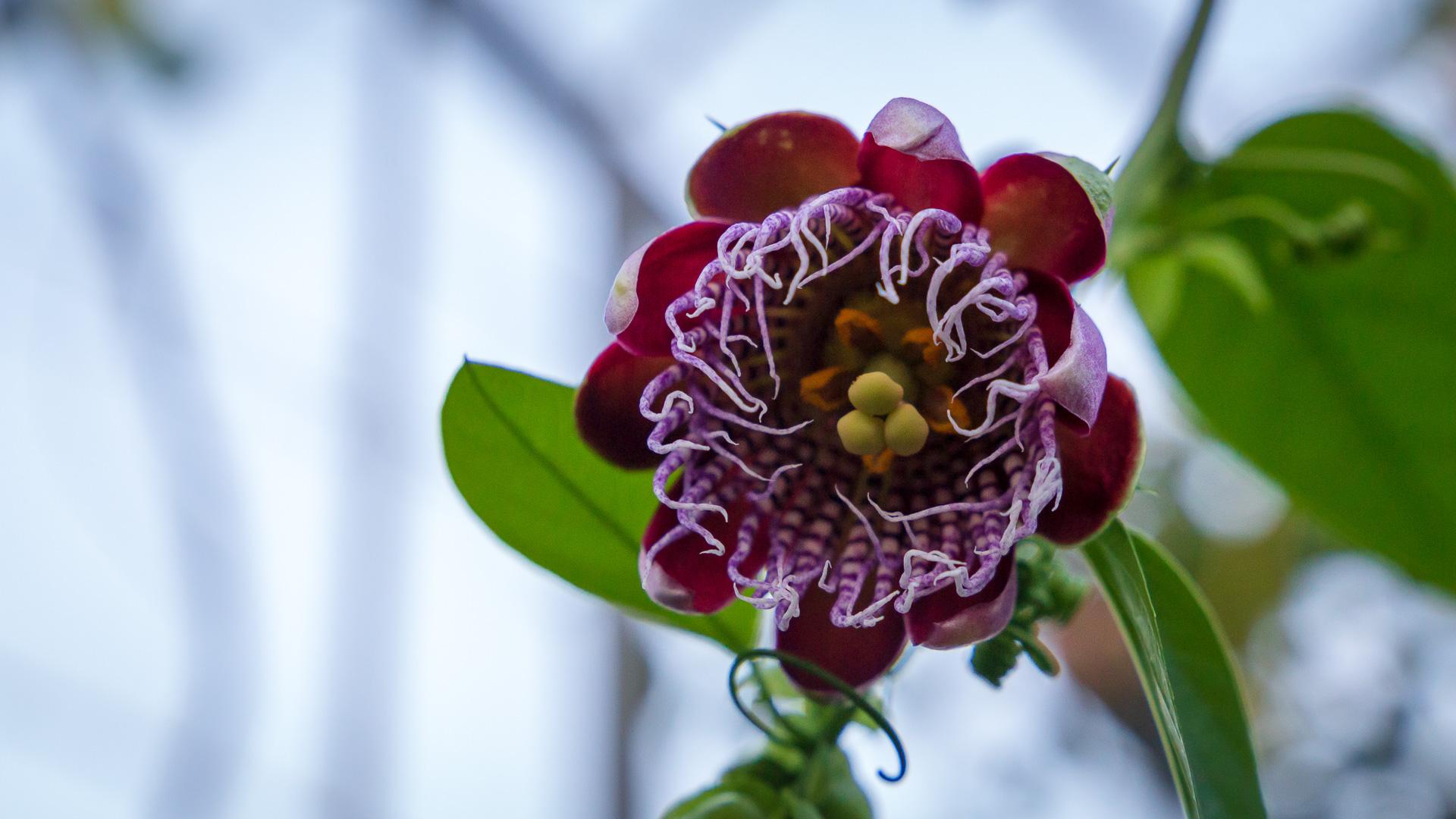 Wunderschöne Pflanzen im botanischen Garten