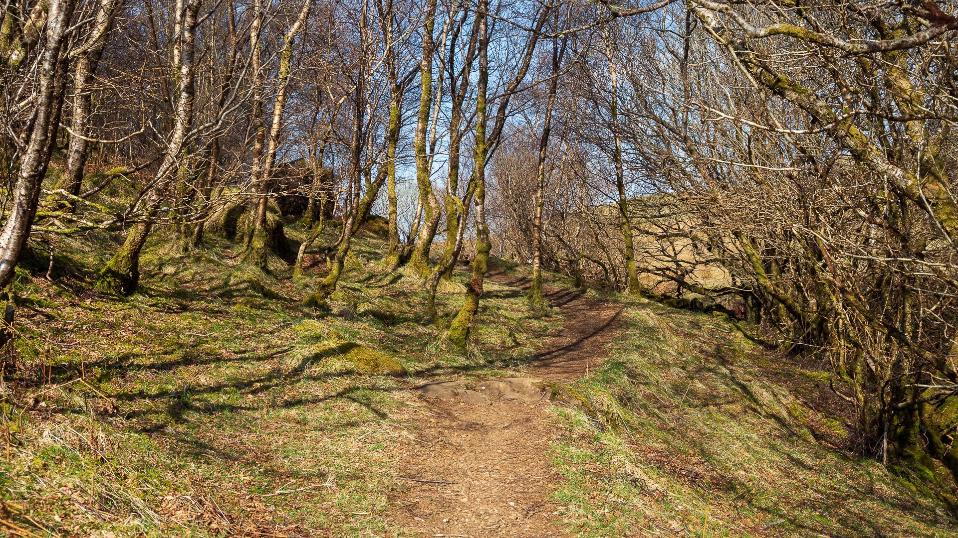 Moosbewachsene Bäume am Weg