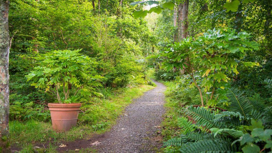 Der Weg vom Parkplatz zum Eingangshäuschen zeigt deutlich: die Natur kommt zurück
