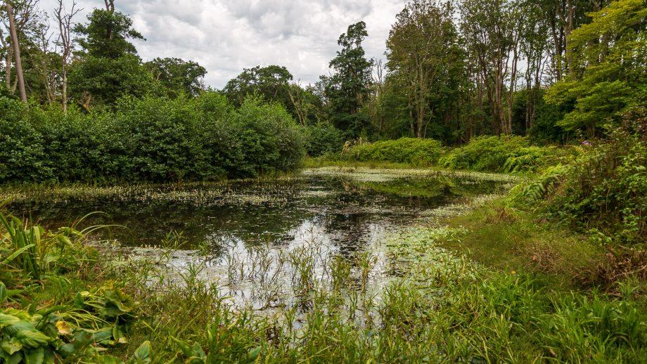 Der Teich von Achamore Gardens