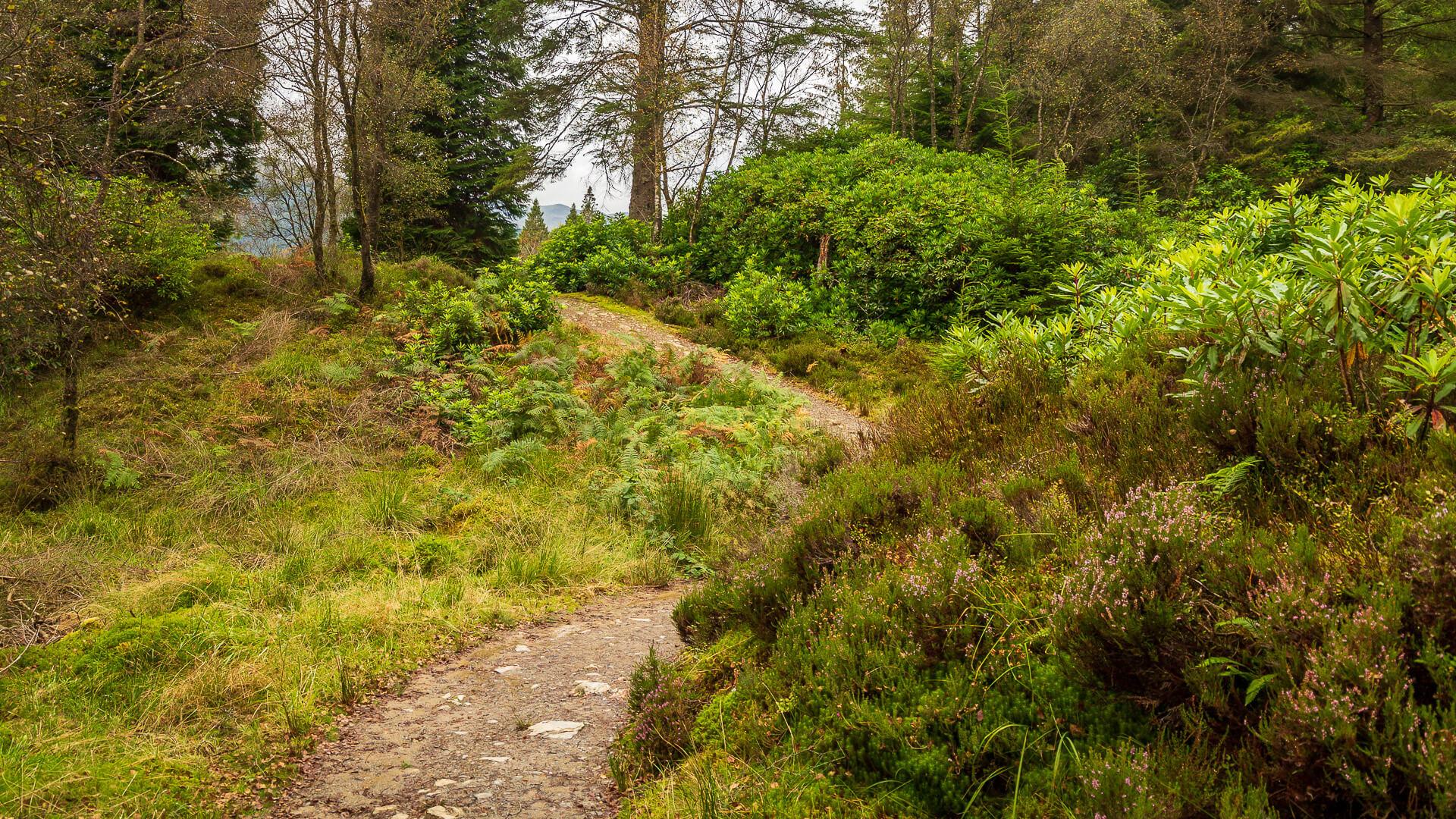Der Waldweg zurück