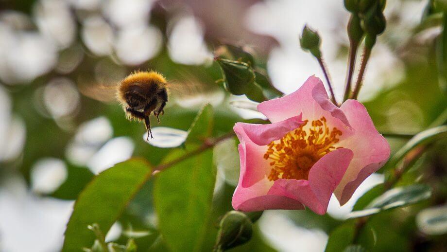Die Blumen locken Insekten an