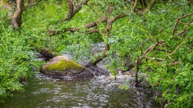 Wasserlauf beim Start der Wanderung